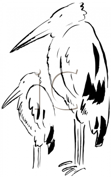 Royalty Free Clipart Image of an Adult and Baby Stork
