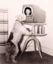 Royalty Free Photo of a Dog Up Close to a Television