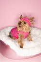 Royalty Free Photo of a Yorkshire Terrier Dog Wearing a Pink Outfit on a Pink Dog Bed