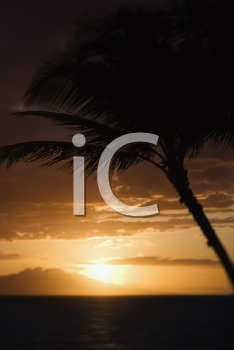 Royalty Free Photo of a Palm Tree Silhouette Against Sunset Over Pacific Ocean and Kihei Island in Maui, Hawaii, USA