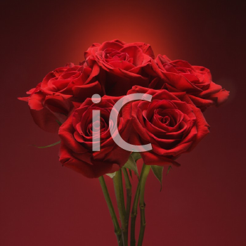 Royalty Free Photo of a Bouquet of red roses against red background