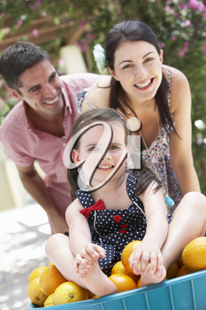Parents Pushing Daughter In Wheelbarrow Filled With Oranges