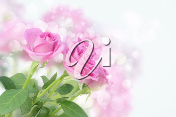 Romantic background with pink roses and bokeh lights