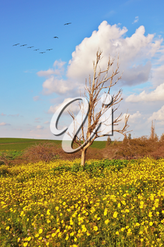 Spring flowering of nature. Blooming meadow, and a lonely dry tree