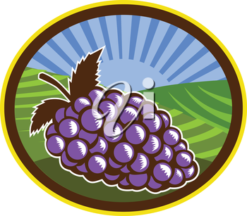 Illustration of a bunch of grapes set inside oval shape with farm vineyard and sunburst in the background done in retro woodcut style.