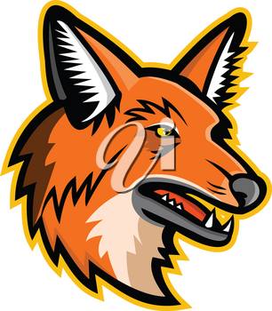 Sports mascot icon illustration of head of a maned wolf, the largest canid of South America viewed from  on isolated background in retro style.