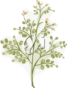 Illustration of the Stalk of a Moringa Plant Covered with Leaves