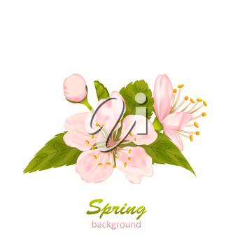 Illustration Cherry Blossom with Leaves Isolated on White Background - Vector