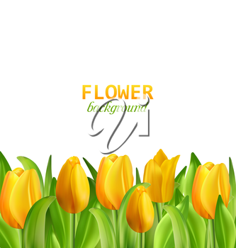 Illustration Beautiful Yellow Flowers Tulips Isolated on White Background, Nature Wallpaper - Vector