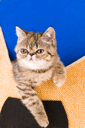 Royalty Free Photo of a Kitten in a Slipper