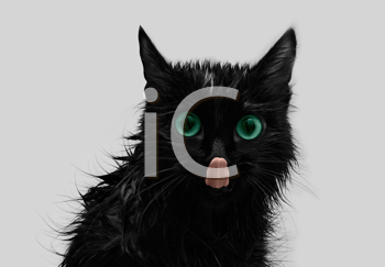 Royalty Free Photo of a Black Cat