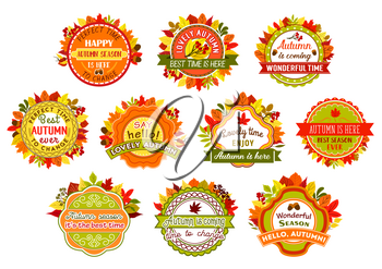 Autumn label set of fall nature leaf. Autumn leaves badge with yellow and orange foliage of forest tree, acorn and rowan berry branch round seal with ribbon banner for fall season themes design