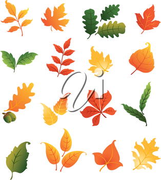 Colourful autumnal leaves set isolated on white background for seasonal design