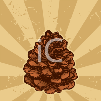 Royalty Free Clipart Image of a Pinecone on a Background