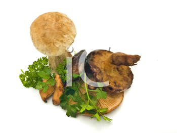Group of mushrooms and green parsley over white
