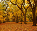 New York City Central Park alley in the Fall.