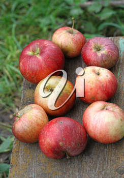 Bright ripe apples close-up outdoor
