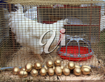 hen in hutch on rural market