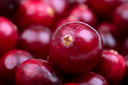 A closeup of fresh cranberries with intentional shallow depth of field