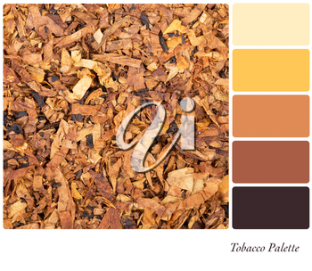 A background of shredded tobacco in a colour palette with complimentary colour swatches
