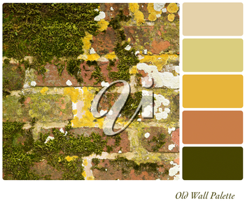 An old brick wall covered in moss and lichen, in a coulr palette with complimentary colour swatches