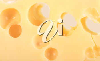 Abstract background of yellow cheese. Close-up. Studio photography.