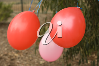 Birthday celebration balloons outdoors with park as backgraund
