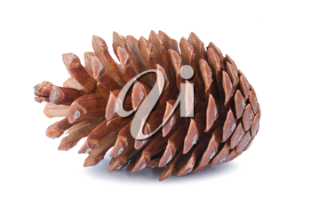 Big fir cone isolated on white background
