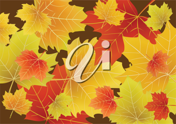 Royalty Free Clipart Image of Autumn Leaves