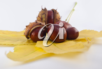 Royalty Free Photo of Chestnuts on Autumn Leaves