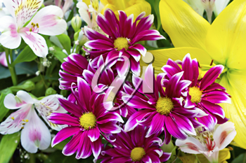 Royalty Free Photo of a Bouquet of Flowers