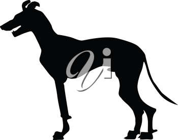 silhouette of greyhound