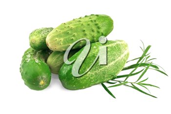 Five green cucumber with a sprig of tarragon is isolated on a white background