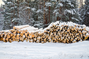 Stack of wood in the winter on a background of trees, snow, sky