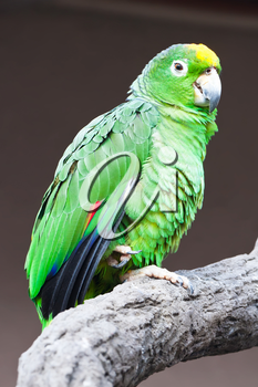 Cute green parrot sitting on wooden stick