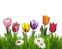 Royalty Free Photo of Colorful Flowers