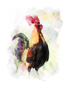 Watercolor Digital Painting Of Colorful Rooster