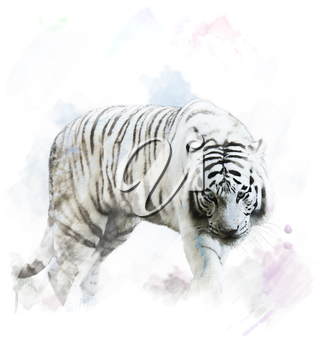 Watercolor Digital Painting Of White Tiger Portrait