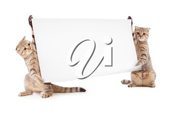 Royalty Free Photo of Two Cats Holding a Banner