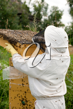 Royalty Free Photo of a Bee Keeper
