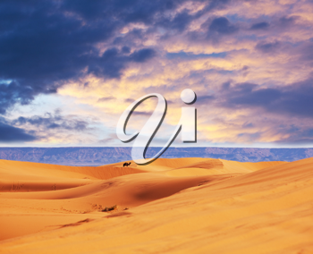 Royalty Free Photo of the Sahara Desert