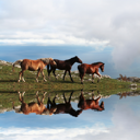 Royalty Free Photo of Three Horses at a Mountain Lake