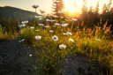 Royalty Free Photo of a Morning Meadow