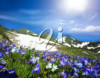Royalty Free Photo of a Mountain Meadow