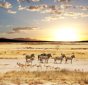 Royalty Free Photo of African Animals
