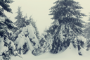 Winter scene forest covered with snow, toned like instagram filter