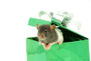 Royalty Free Photo of a Rat on a Present