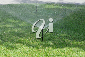 Sprinkler spraying stream of water on lush green grass