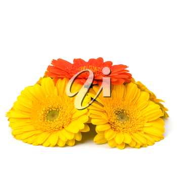 Beautiful daisy gerbera flowers isolated on white background