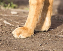 paw dog on the nature